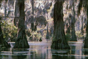 lrg_bald_cypress_swamp